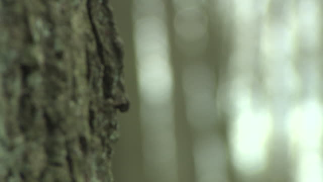pull focus on trunks of woodland trees, without foliage - tree stock videos & royalty-free footage