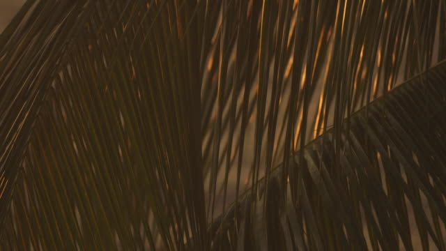 pull focus onto golden palm leaves - palmenblätter stock-videos und b-roll-filmmaterial