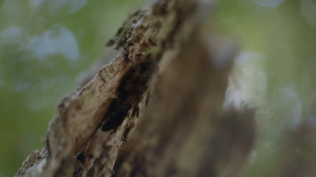 pull focus over a piece of bark adorned by a cobweb, new south wales, australia. - extreme close up stock videos & royalty-free footage
