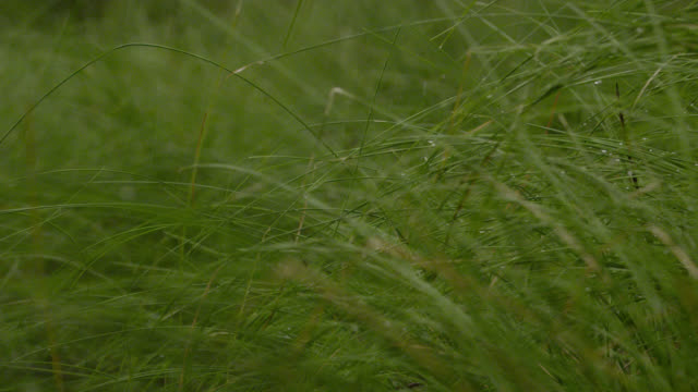 pull focus over grass in rain, australia. - weather stock videos & royalty-free footage