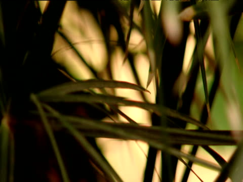 Pull focus to blurred palm fronds