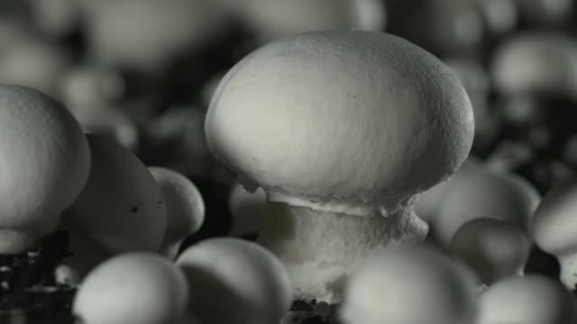 pull focus to mushroom on mushroom farm, uk - fade in stock videos & royalty-free footage