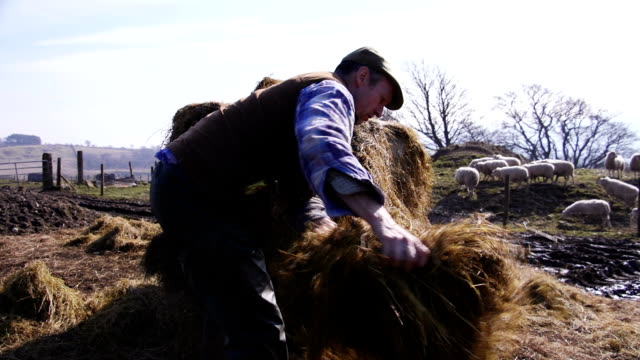 pulling apart a silage bale - bale stock videos & royalty-free footage