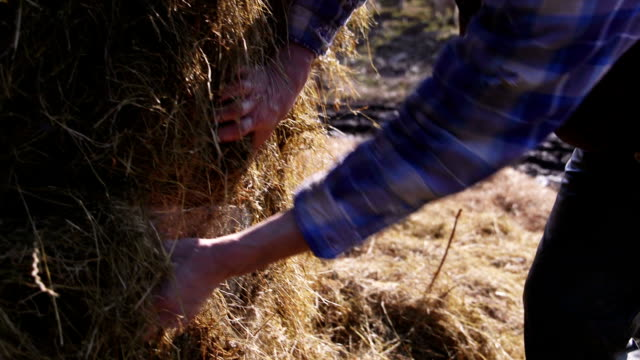 pulling apart a silage bale - organic farm stock videos & royalty-free footage