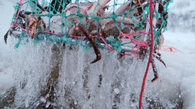 slo mo pulling up a trap with king crabs - fishing industry stock videos & royalty-free footage