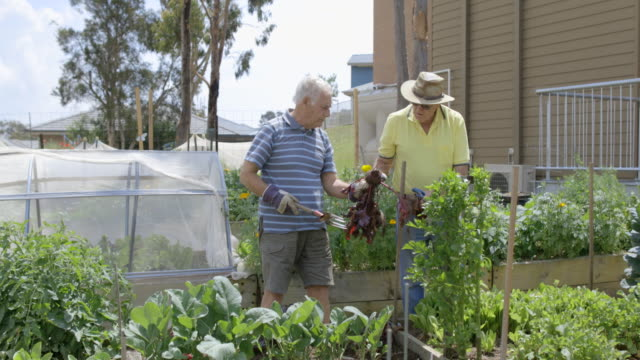 pulling up the beetroot - active seniors stock videos & royalty-free footage