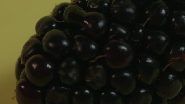 pulsating close-up focus pulls on a blackberry that is starting to rot against a yellow background. - ascorbic acid stock videos & royalty-free footage