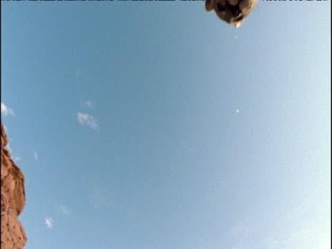 vídeos y material grabado en eventos de stock de puma jumps over camera, arizona - puma