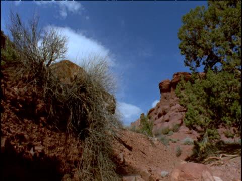 vídeos y material grabado en eventos de stock de puma walks down slope in desert, usa - puma