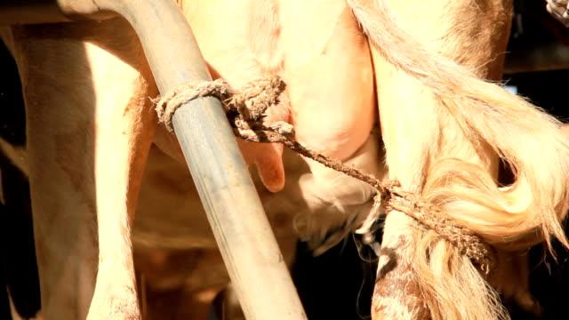 kick milch - melken stock-videos und b-roll-filmmaterial