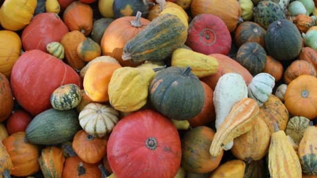 vídeos de stock e filmes b-roll de pumpkin galore - agrafo
