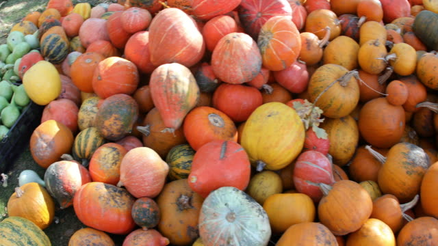 pumpkin galore - gourd stock videos and b-roll footage