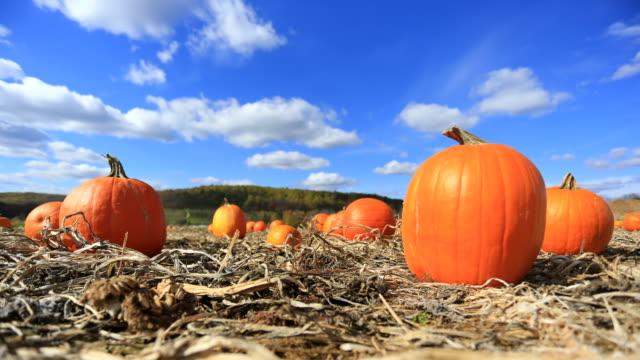 pumpkin patch - pumpkin stock videos & royalty-free footage
