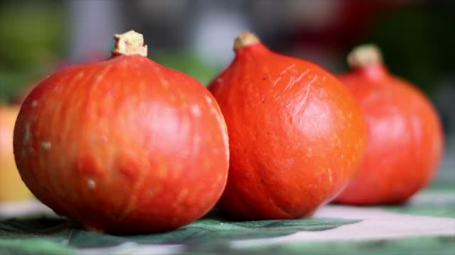 vídeos y material grabado en eventos de stock de pumpkin - calabaza no comestible