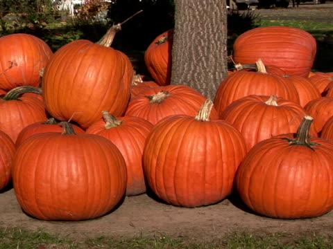 vídeos y material grabado en eventos de stock de cu, zi pumpkins at tree trunk, oregon, usa - grupo mediano de objetos