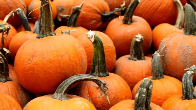 pumpkins galore - pumpkin stock videos & royalty-free footage