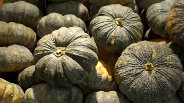 vídeos y material grabado en eventos de stock de abundantes pumpkins - calabaza no comestible