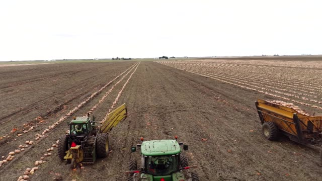 pumpkins grown for nestle usa libby's pumpkin are harvested by tractors in this aerial shot in hartsburg illinois us on friday oct 27 2017... - dumper truck stock videos & royalty-free footage