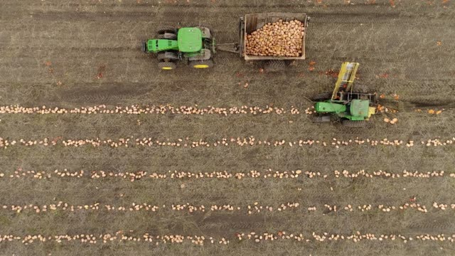 Pumpkins grown for Nestle USA Libby's Pumpkin are harvested in this aerial tracking shot in Hartsburg Illinois US on Friday Oct 27 2017 Photographer...