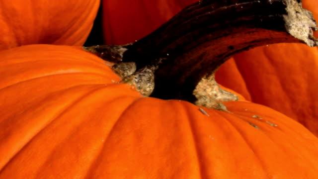 vídeos y material grabado en eventos de stock de pumpkins en la luz del sol, hd 1080 - calabaza no comestible