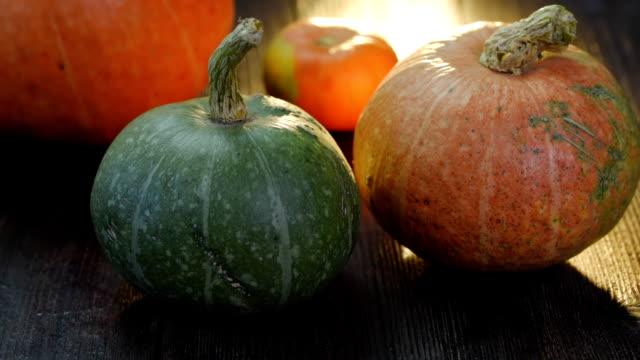pumpkins in sunlight - pumpkin stock videos & royalty-free footage