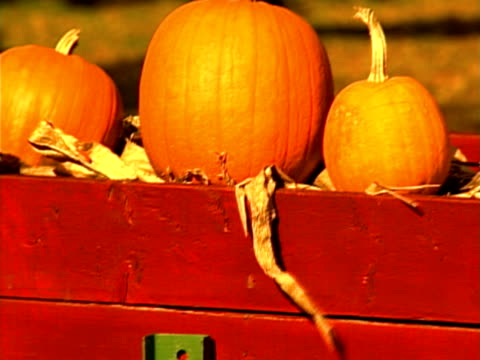 pumpkins - medium group of objects stock videos & royalty-free footage