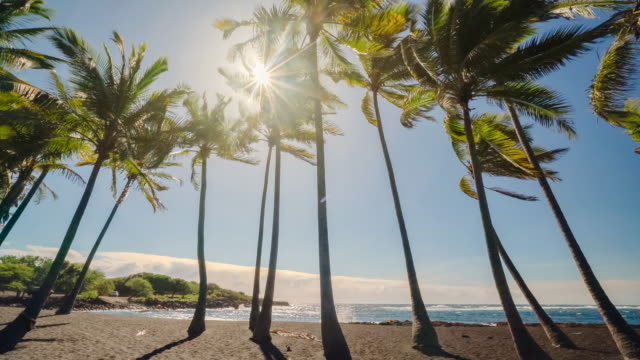 punalu'u beach palms and sunrays - big island hawaii islands stock videos & royalty-free footage