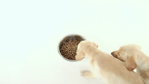 puppies eating - three animals stock videos & royalty-free footage