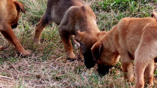 stockvideo's en b-roll-footage met puppies in park - drie dieren