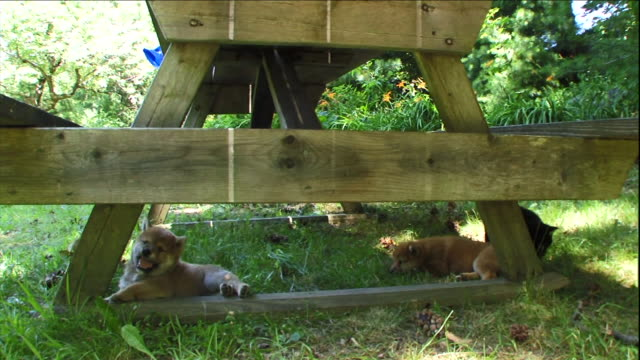 puppies play under a picnic table. - picnic table stock videos and b-roll footage