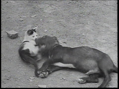 1934 montage puppy and kitten playing together / united states - new deal stock videos & royalty-free footage
