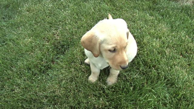 Puppy Attention
