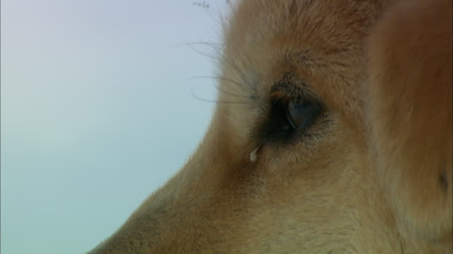 a puppy blinks its eyes. - blinking stock videos & royalty-free footage