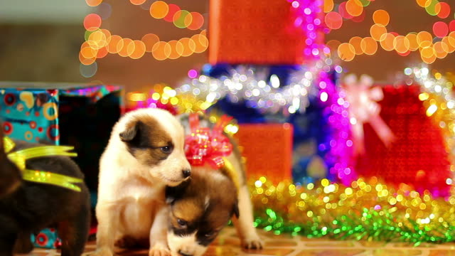 Puppy christmas and gift boxs