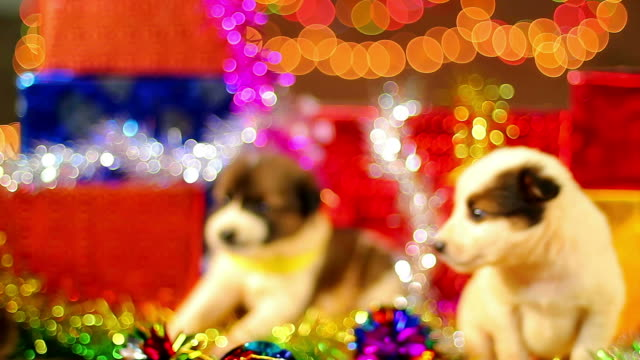 puppy christmas series - puppy stock videos & royalty-free footage
