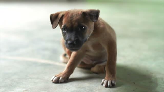 vídeos de stock e filmes b-roll de cachorrinho fofo doméstico - ausência