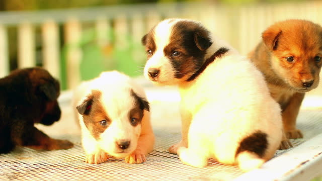 puppy cute - four animals stock videos & royalty-free footage