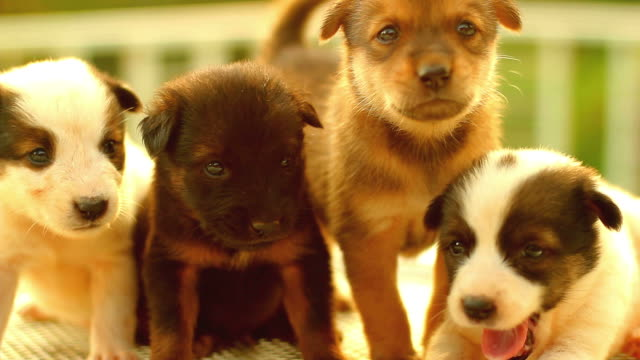 puppy cute - puppy stock videos & royalty-free footage