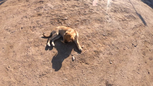 puppy dog playing in sand - animal body part stock videos & royalty-free footage