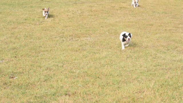 puppy dogs running across grass field - sand dune stock videos & royalty-free footage