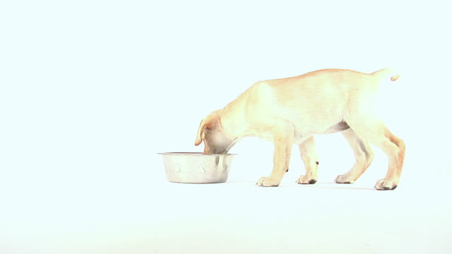 puppy eating - retriever stock videos & royalty-free footage