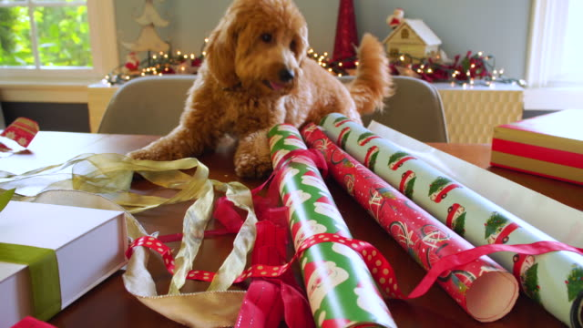 puppy exploring table filled with christmas wrapping paper and presents - christmas wrapping paper stock videos & royalty-free footage