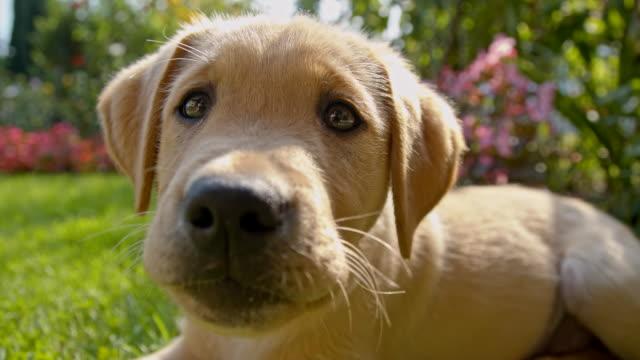 MS LA Puppy In The Backyard