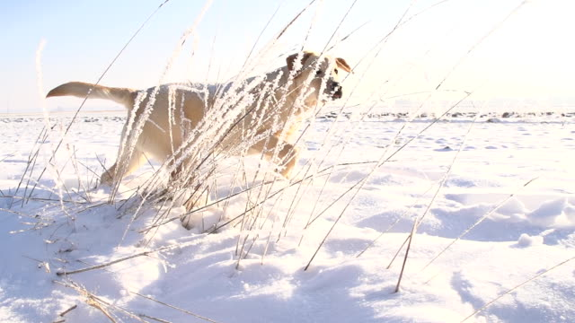 slo mo puppy in the snow - pursuit sports competition format stock videos & royalty-free footage