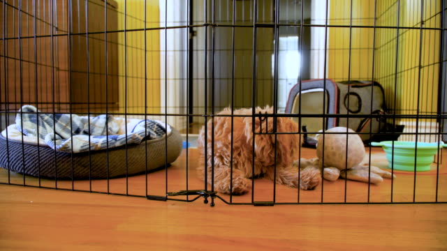 puppy inside his exercise pen - crate stock videos & royalty-free footage