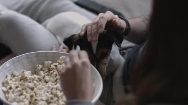 vídeos y material grabado en eventos de stock de puppy looking at bowl of popcorn - palomitas