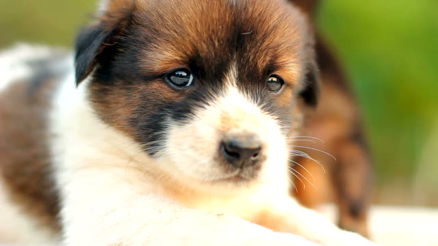 Puppy looking at the camera