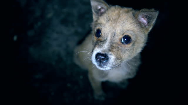 puppy looking up at camera loneliness - animal eye stock videos & royalty-free footage