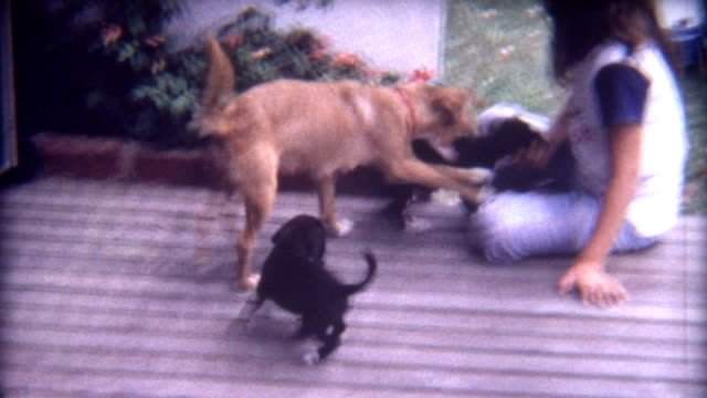 puppy love 1960's - home movie stock videos & royalty-free footage