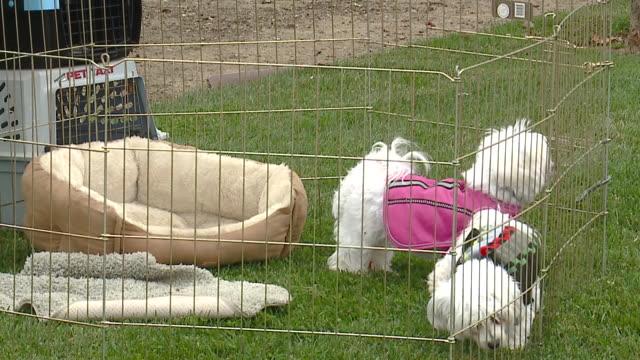 KTLA Puppy Mill Protest in Seattle